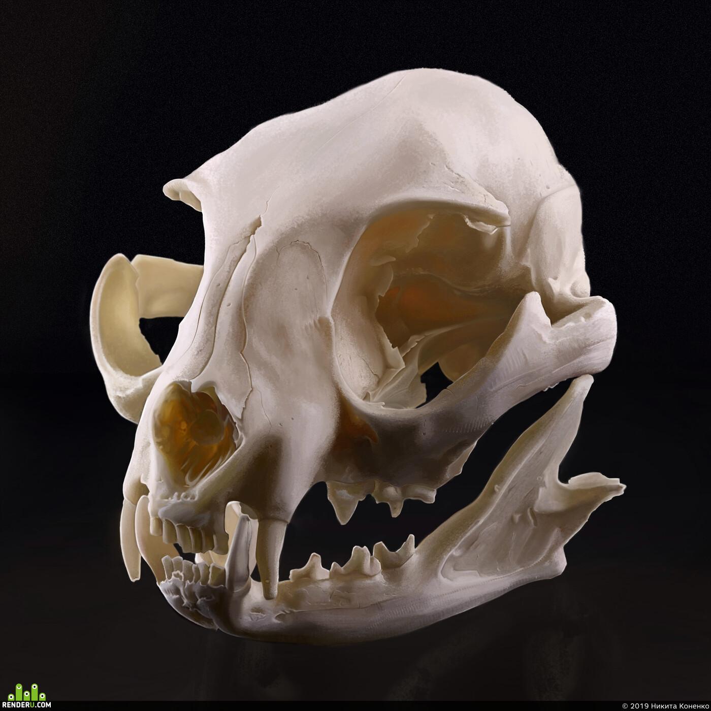 skull, Photoshop, art, 2dart
