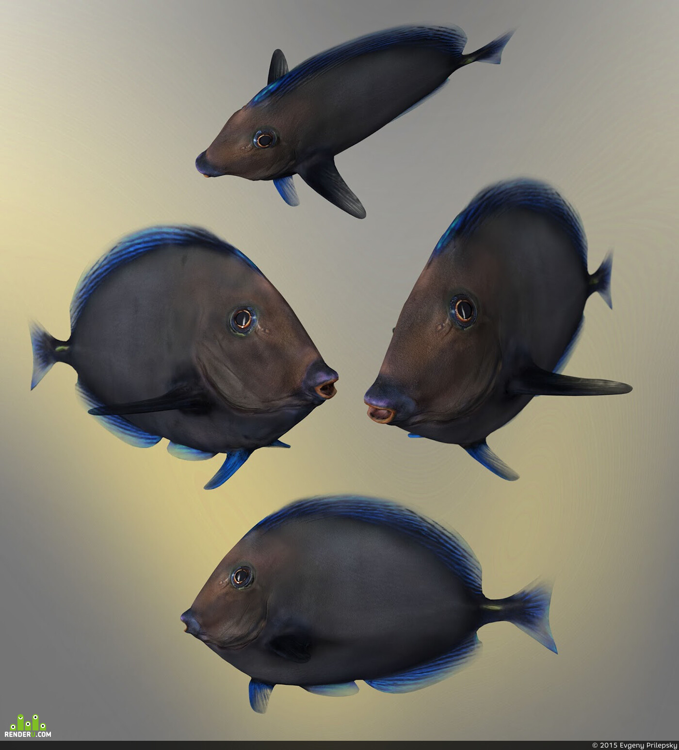 Fish Paracanthurus Hepatus Blue Tang