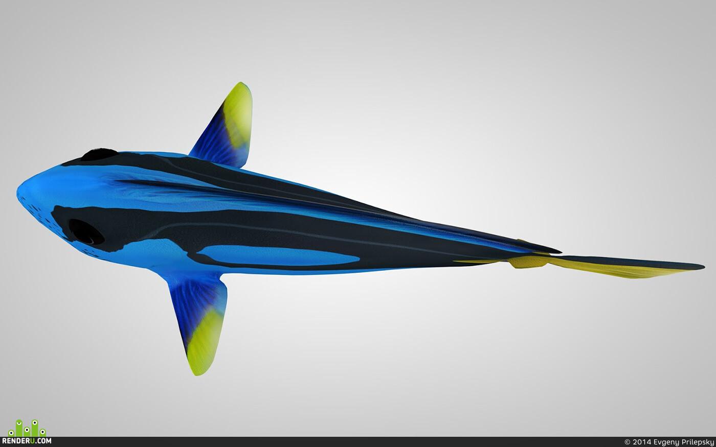 Paracanthurus Hepatus - Blue Tang