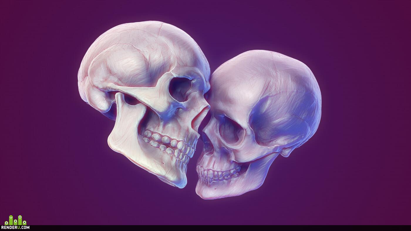 анатомия, кости, Скелет