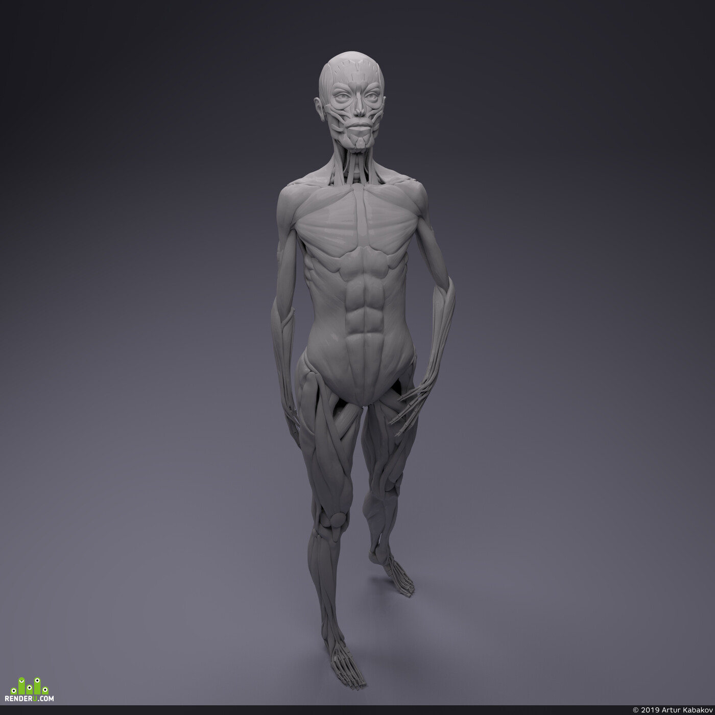Character, anatomy, digital sculpture, Digital 3D