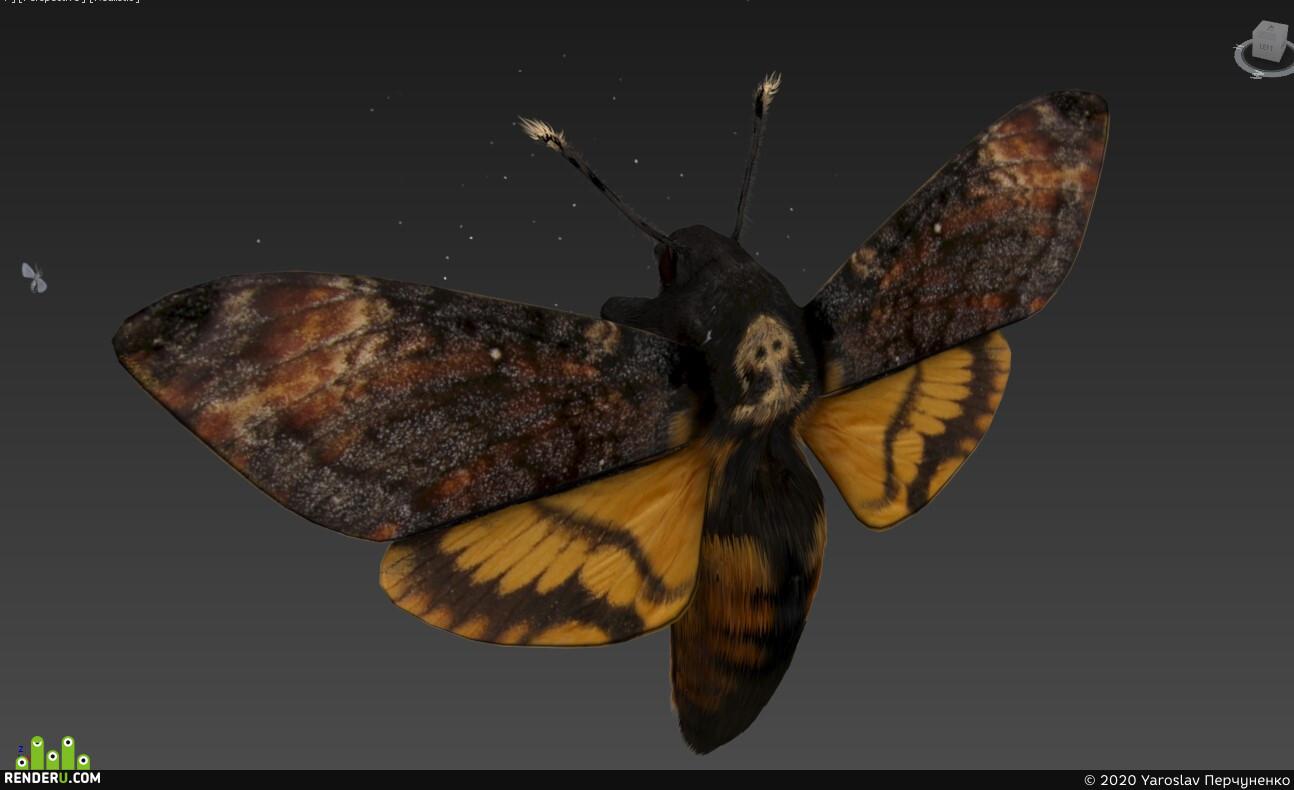 butterfly, night, head