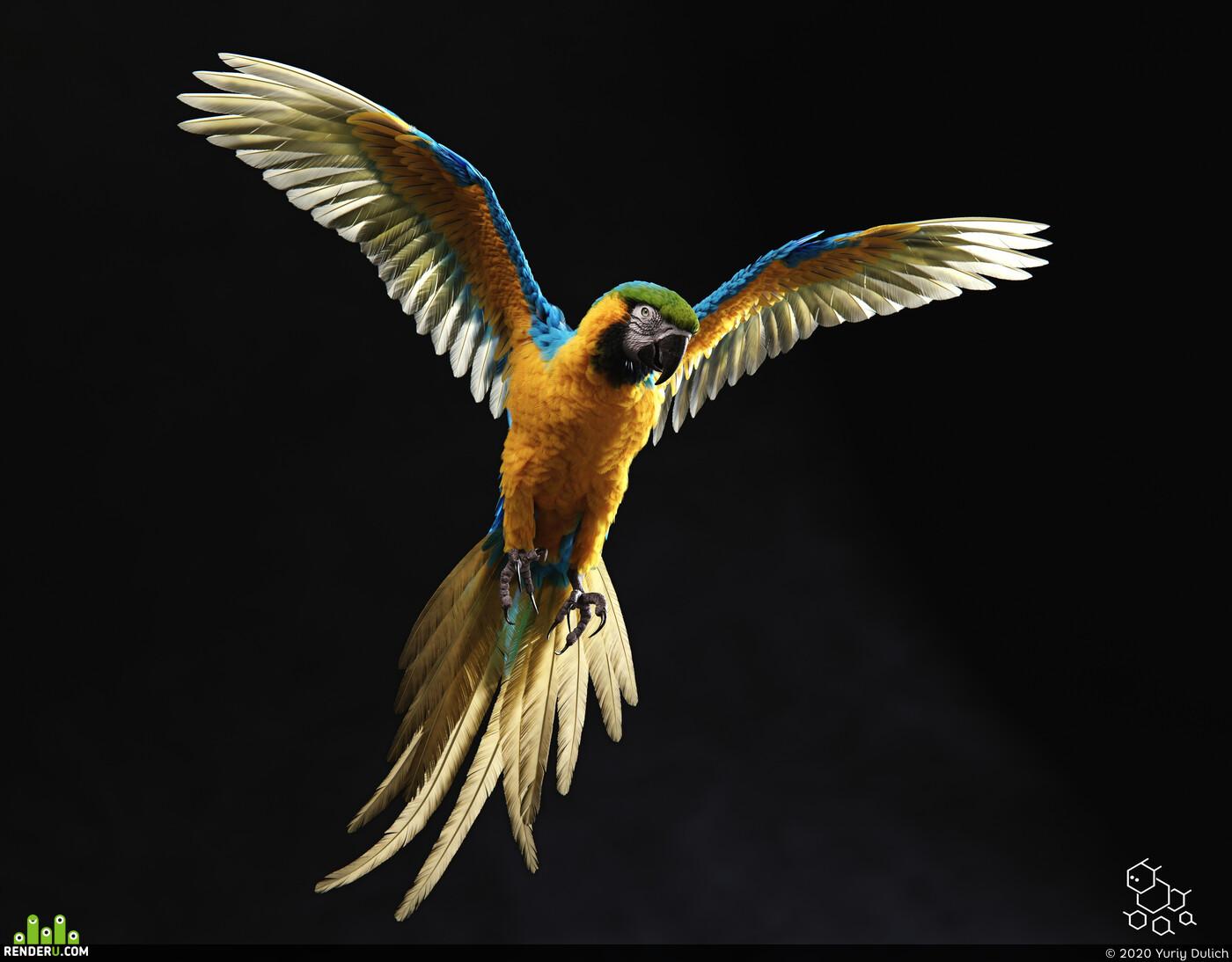 Попугай, ара, перья, фотореализм, груминг, 3д перя, животное, птица