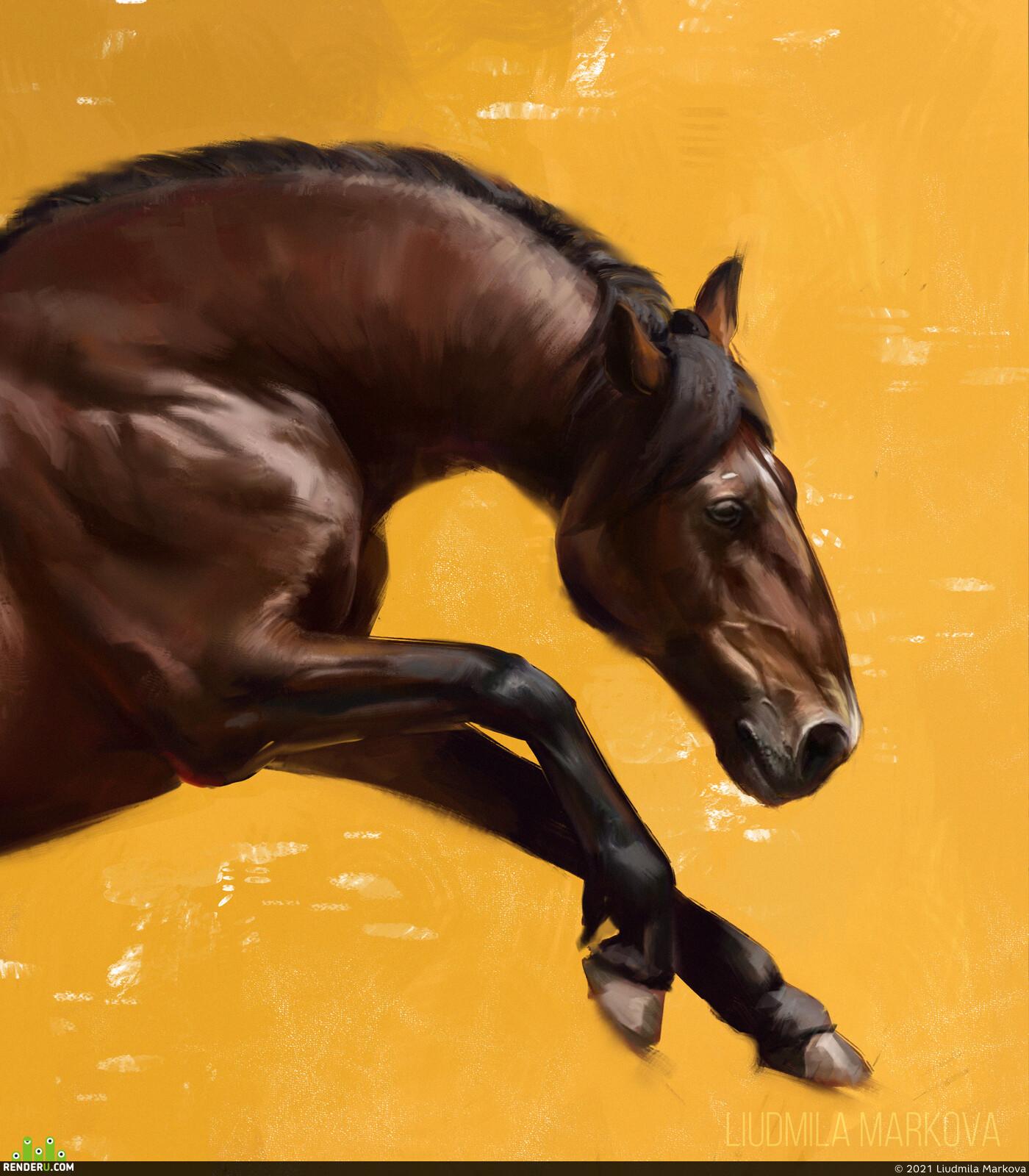 western, study, horse, skethes, color, стадик по фото
