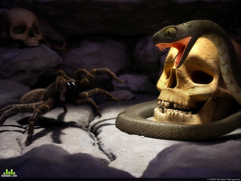 preview Змея и паук