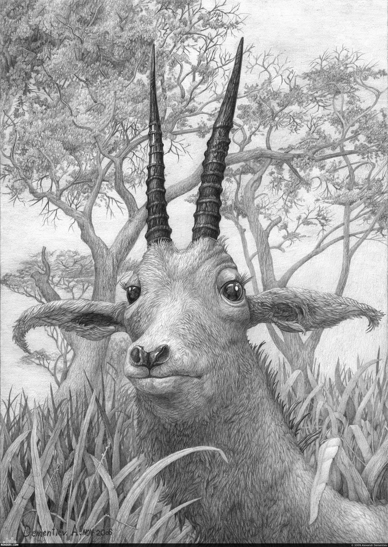 preview Портрет антилопы (красота рогов)
