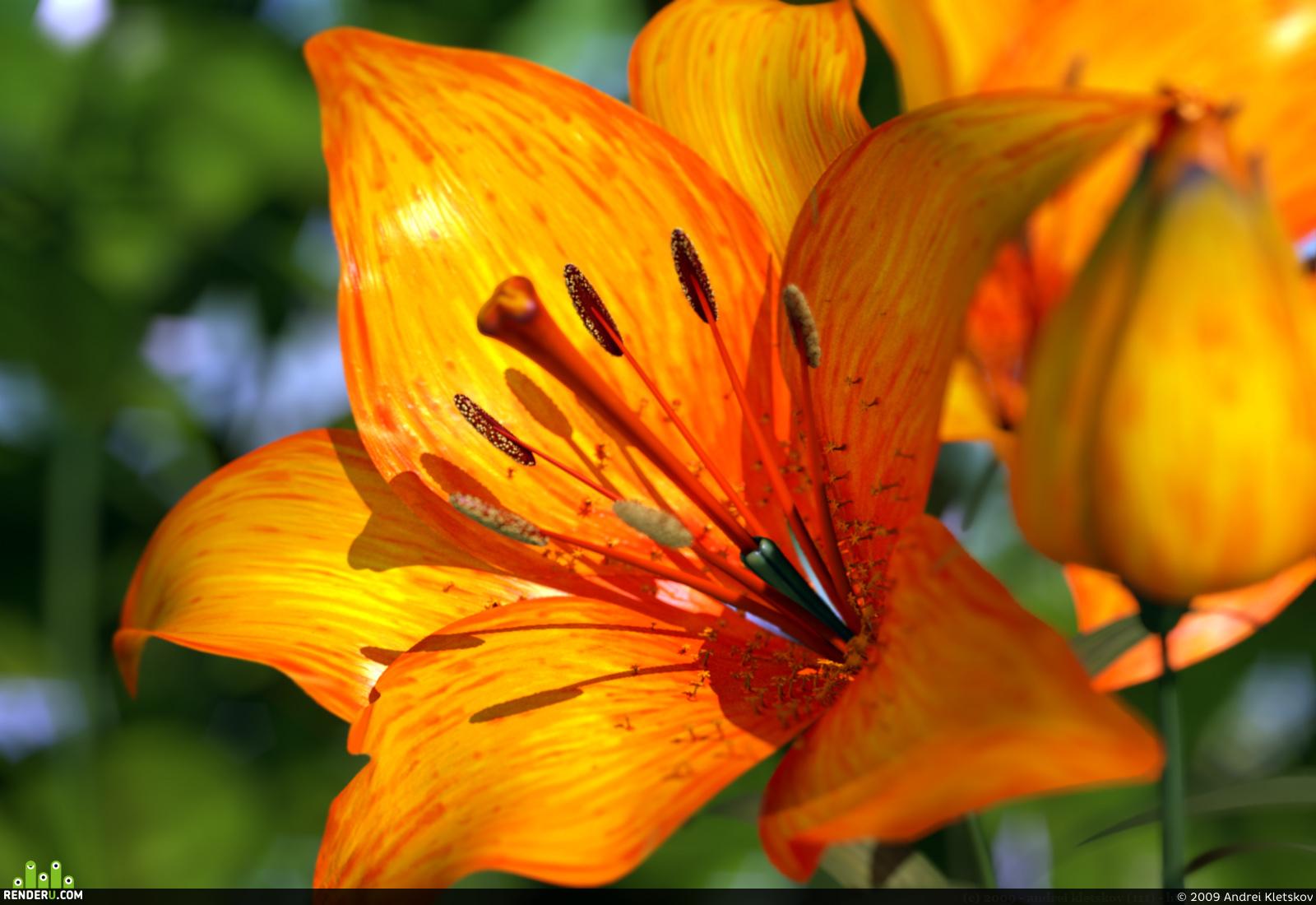 preview оранжевый цветок