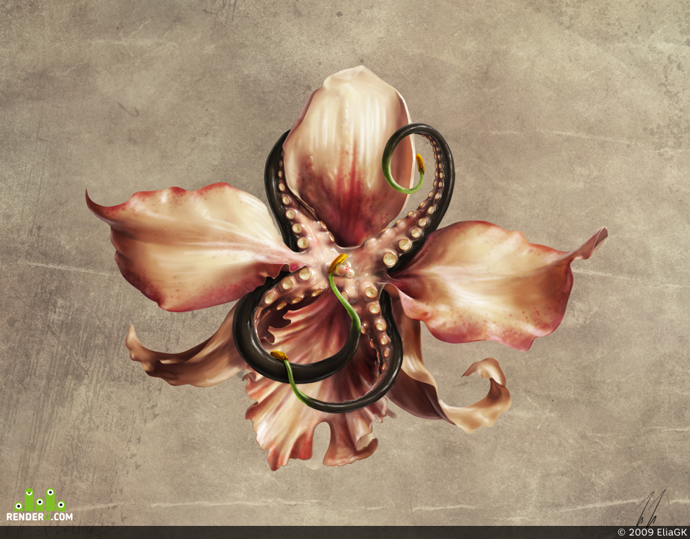 preview Orchid-octopus