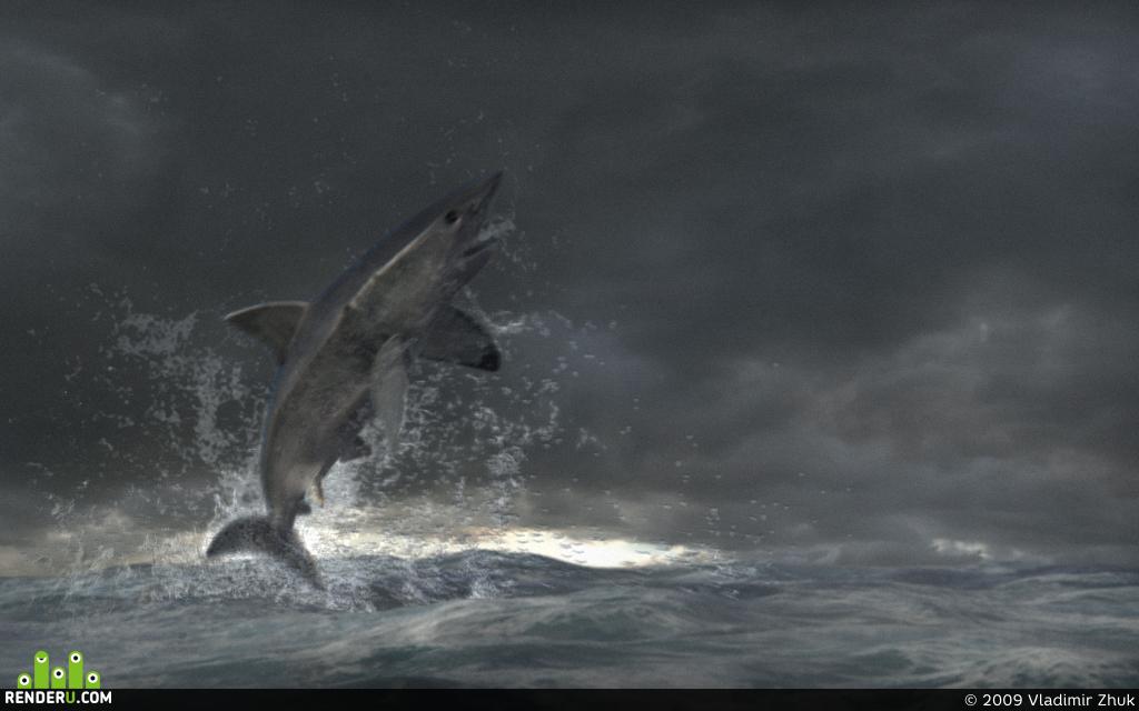 preview Shark