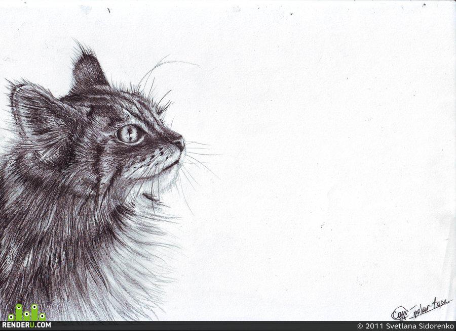Кошки, картинки для срисовки смешные котики гелевой ручкой