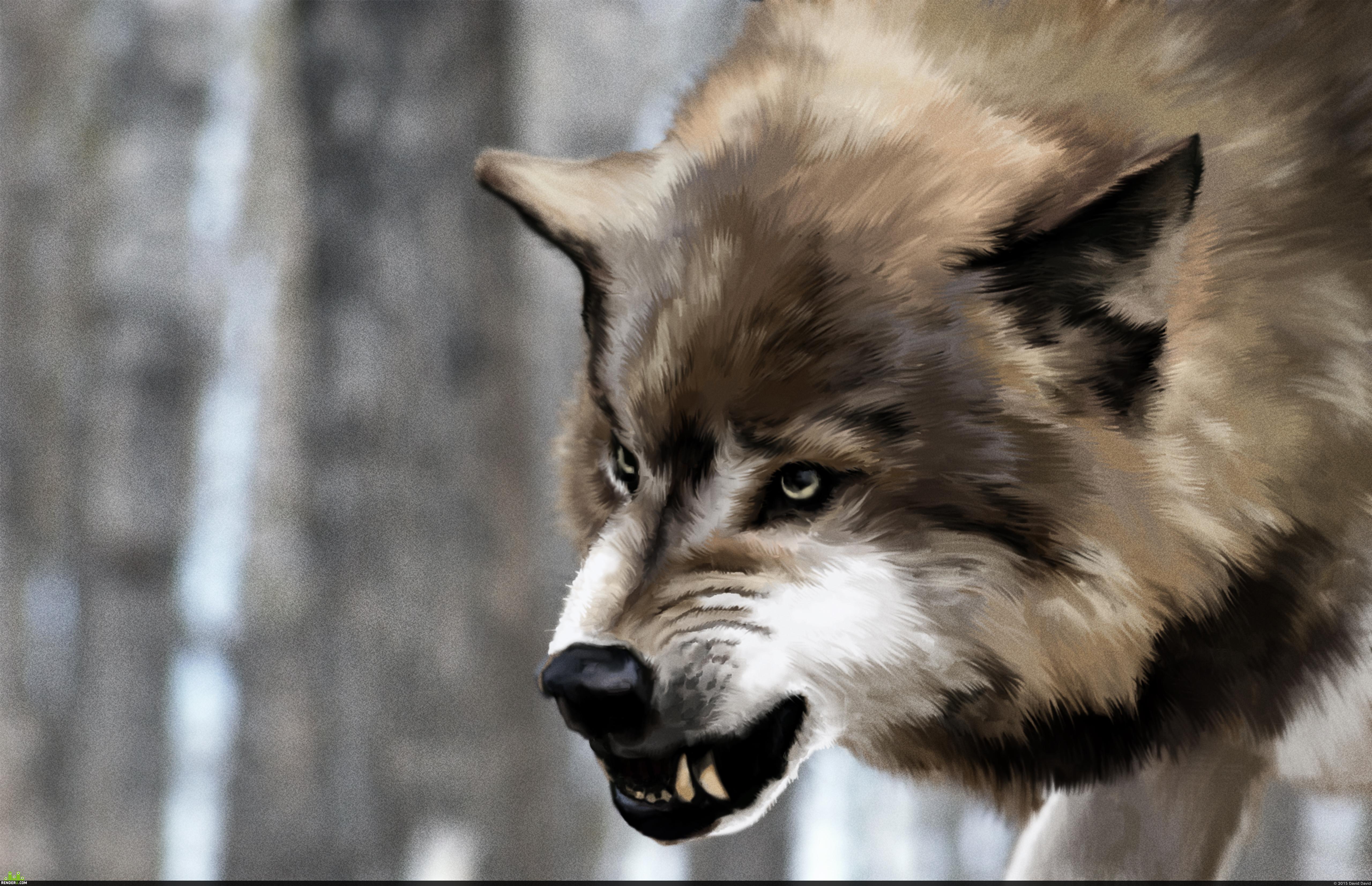 preview Волк