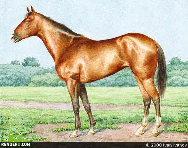 preview Иллюстрация (для энциклопедии лошадей)