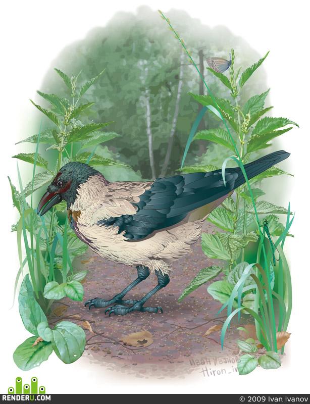 preview Иллюстрация (для энциклопедии птиц)