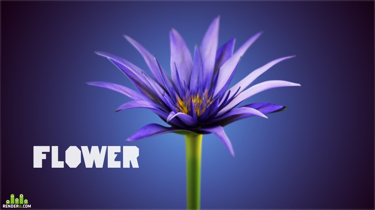 preview Flower Animation