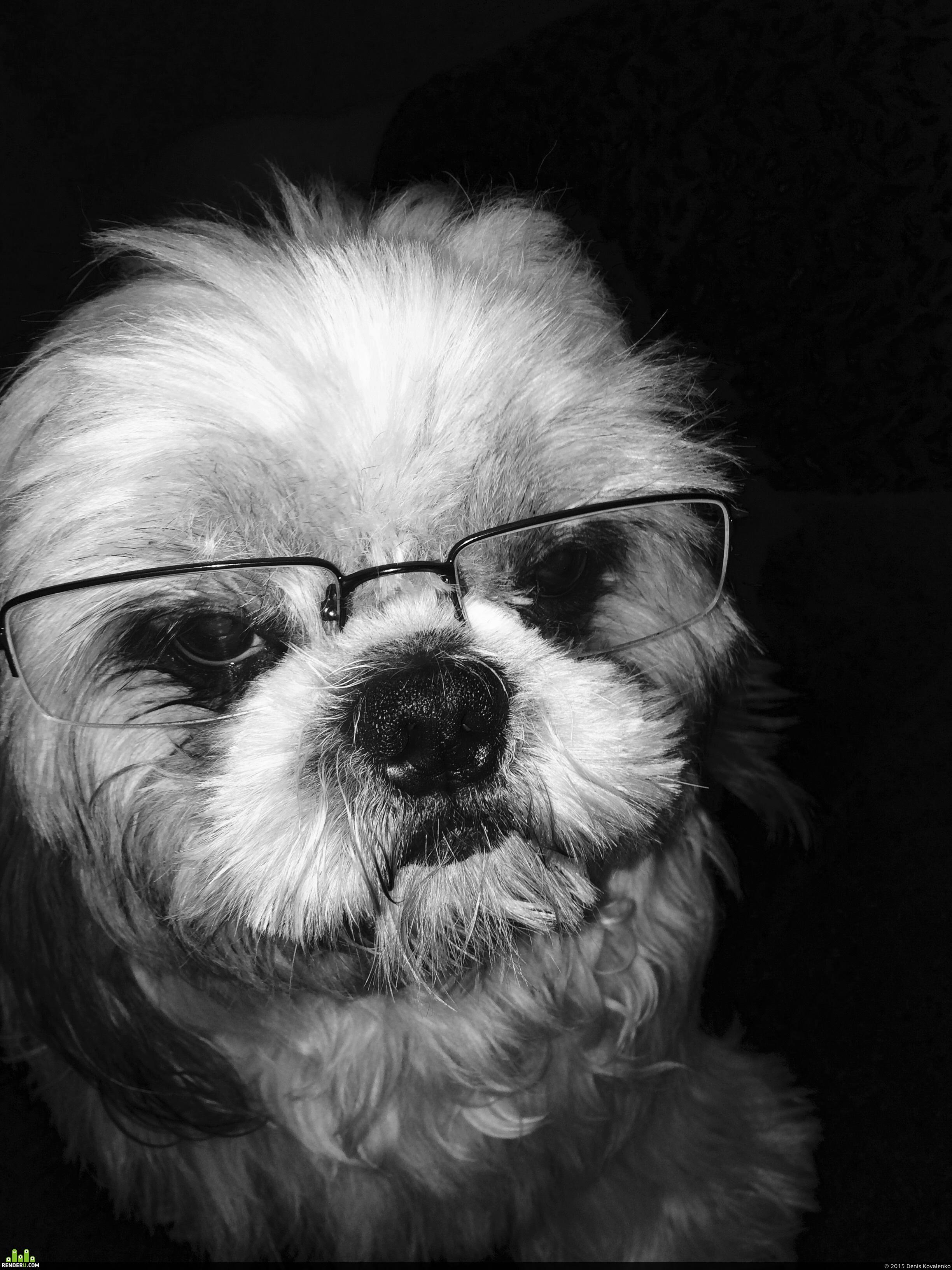 preview Пес в очках