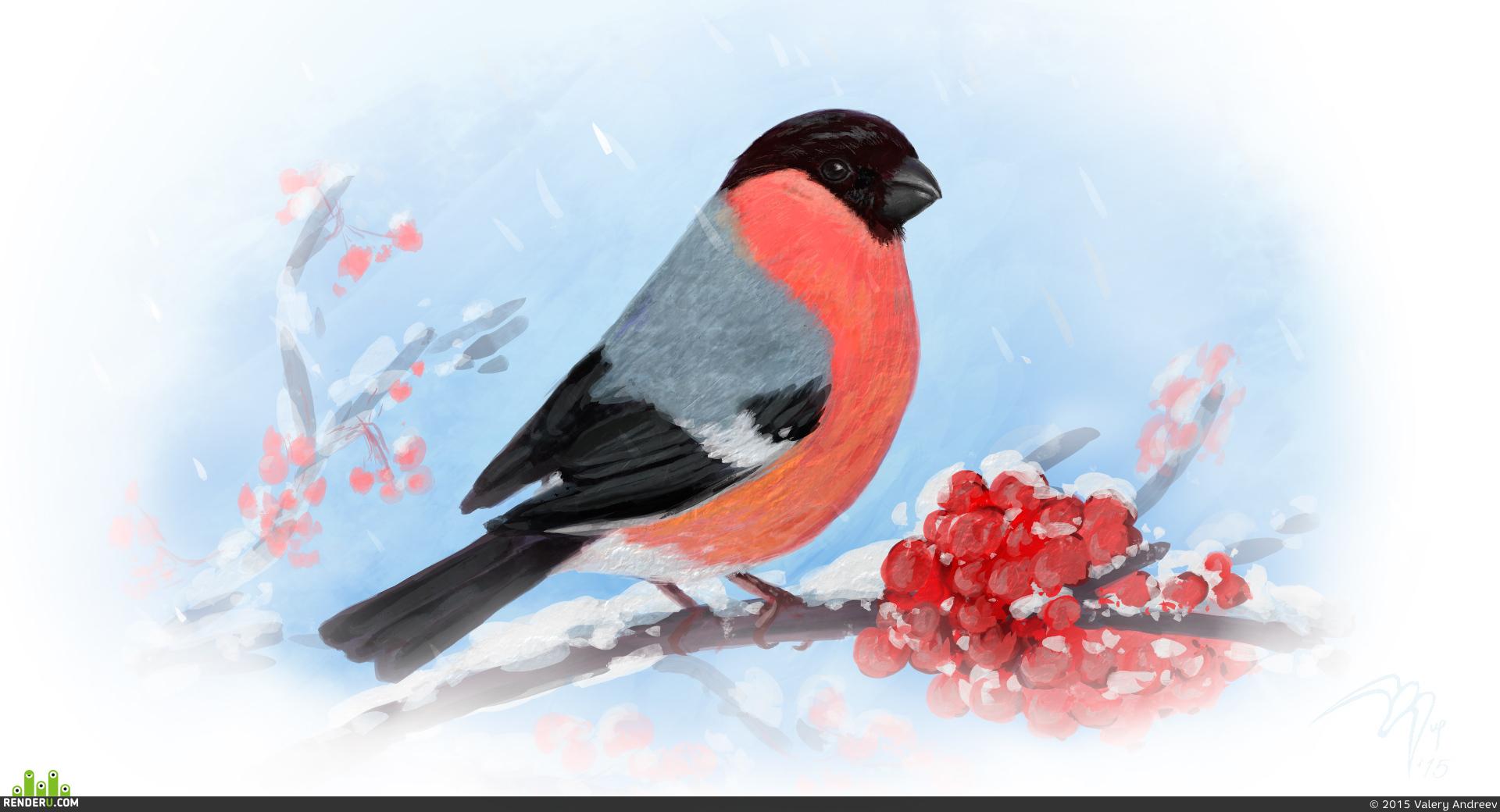 Картинка снегирь для детей на белом фоне, про