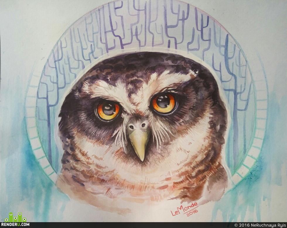 preview Тропическая очковая сова