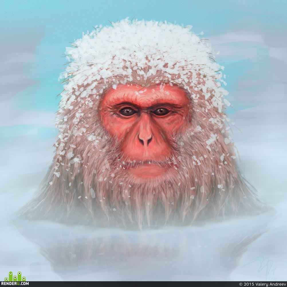 preview Снежная обезьяна