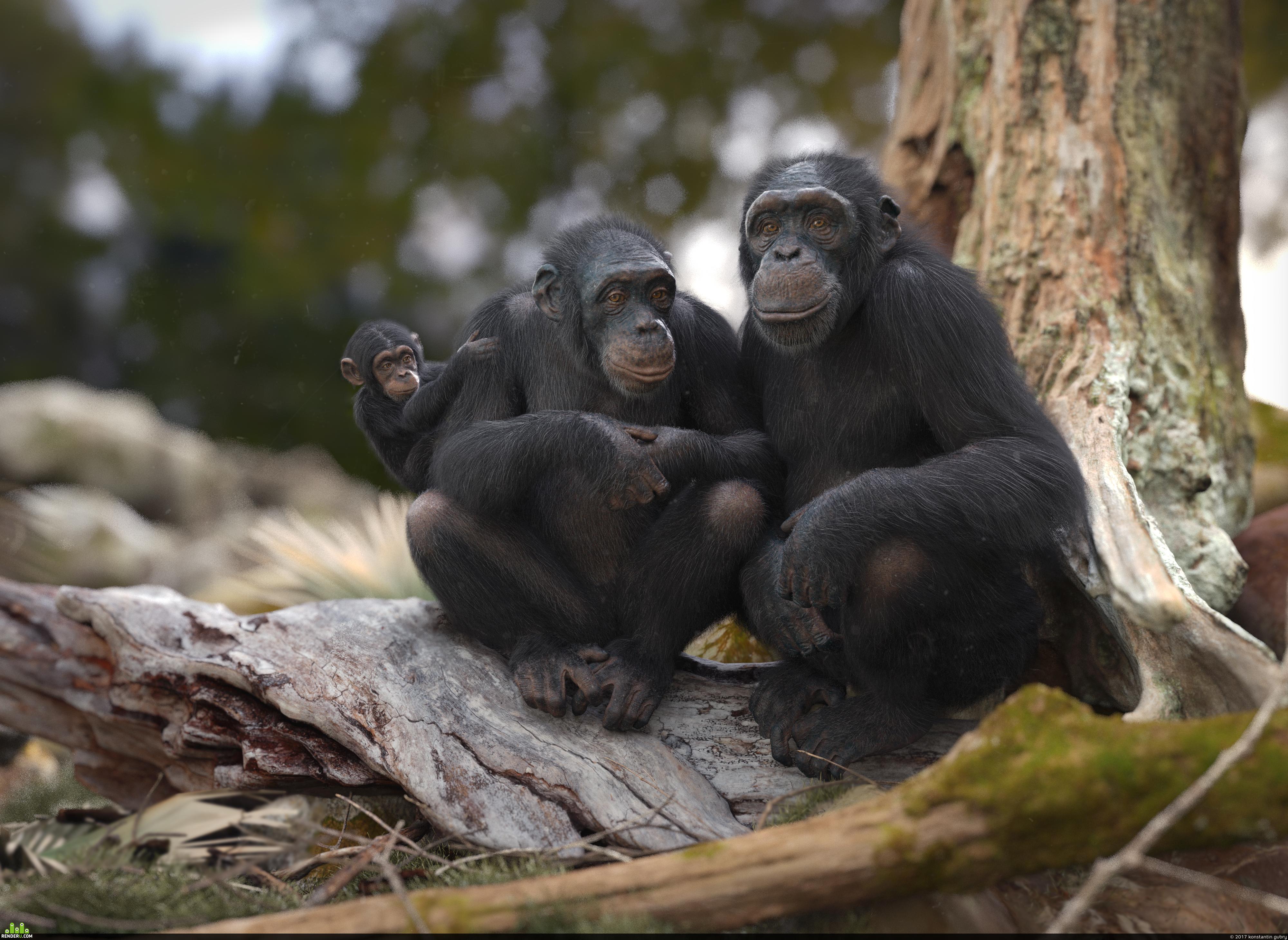 preview Шимпанзе. Где-то на юго-востоке Сенегала...