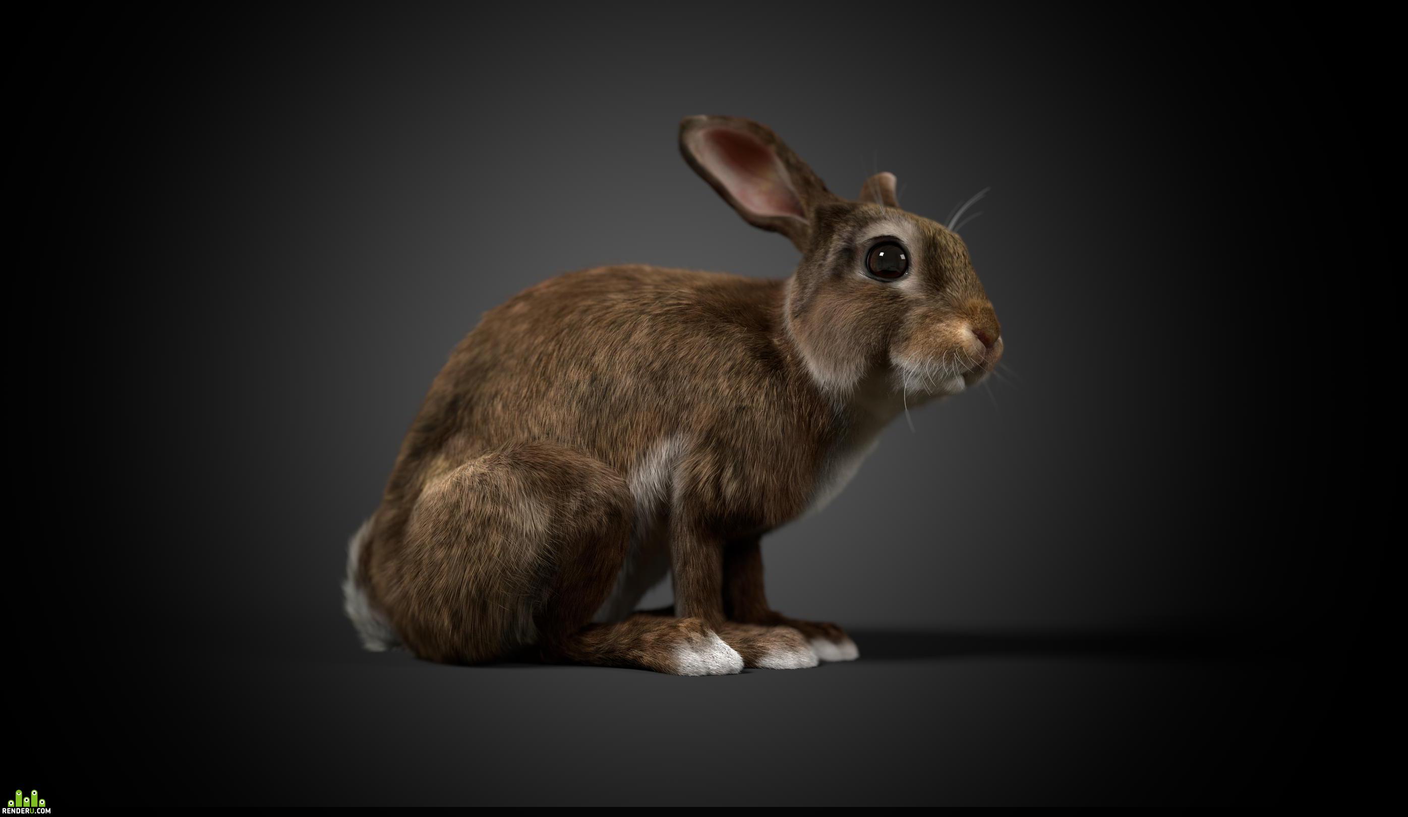 preview Кролик