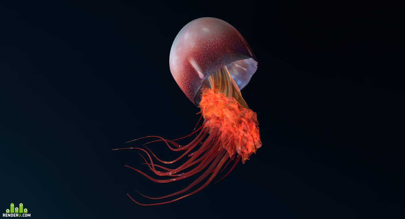preview медуза