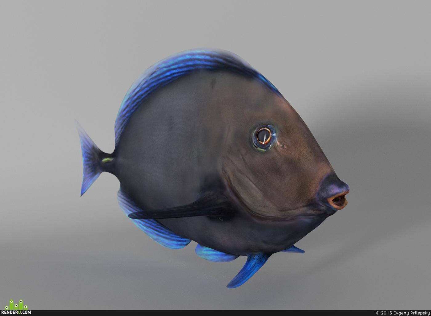 preview Fish Paracanthurus Hepatus Blue Tang