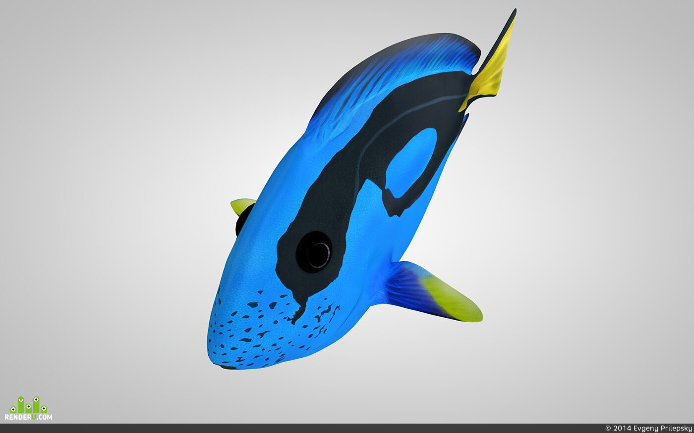 preview Paracanthurus Hepatus - Blue Tang