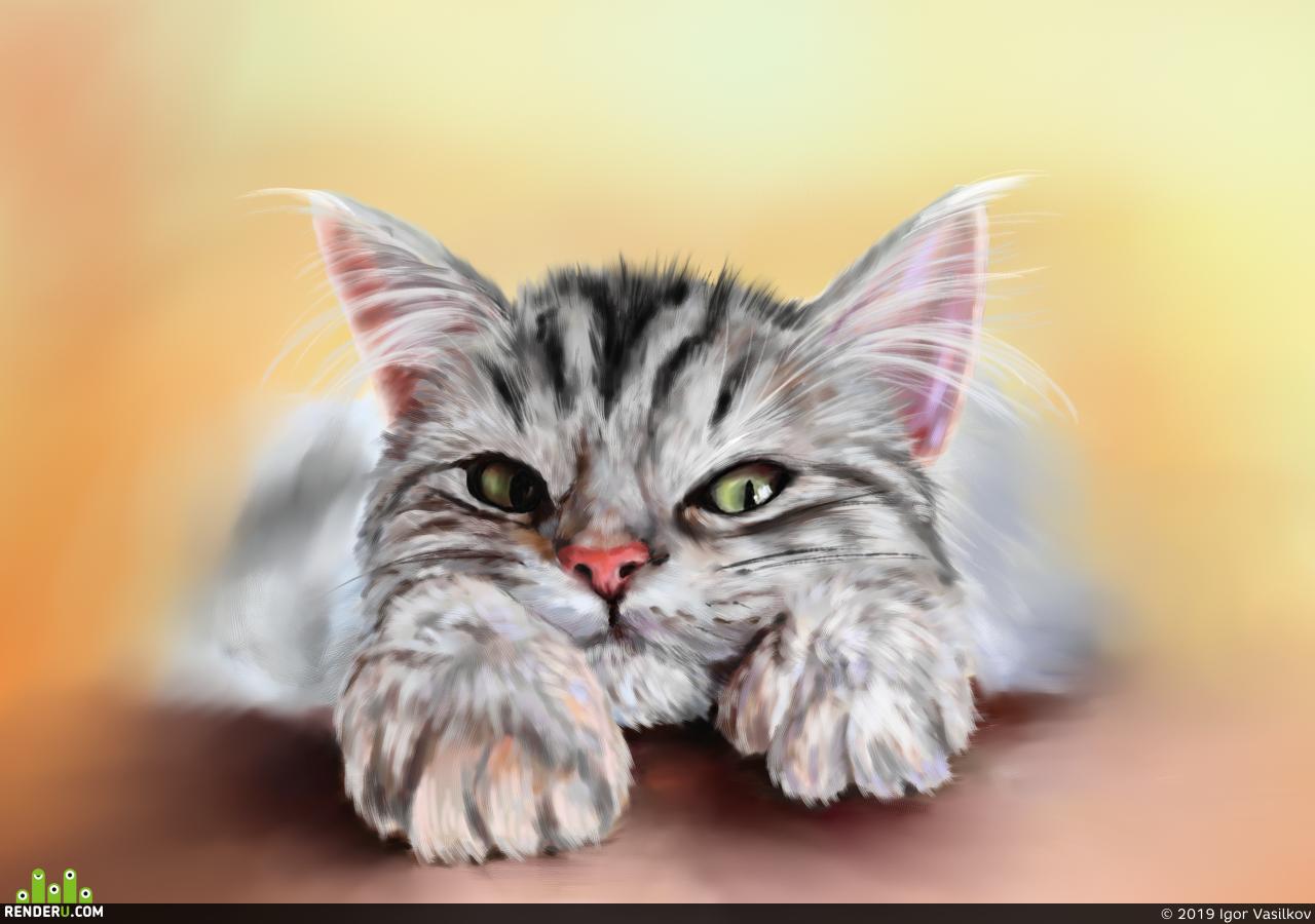 preview Кот