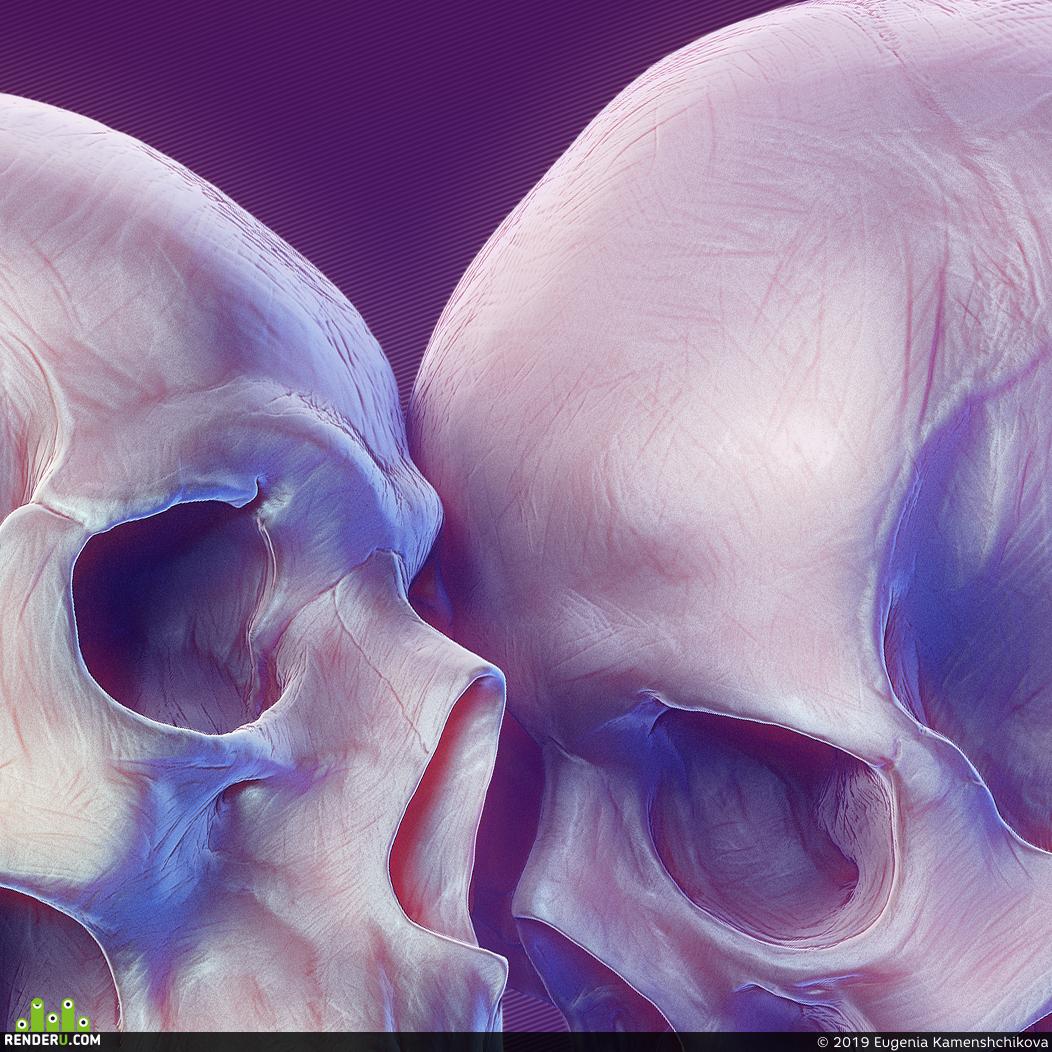 preview Стадик по анатомии