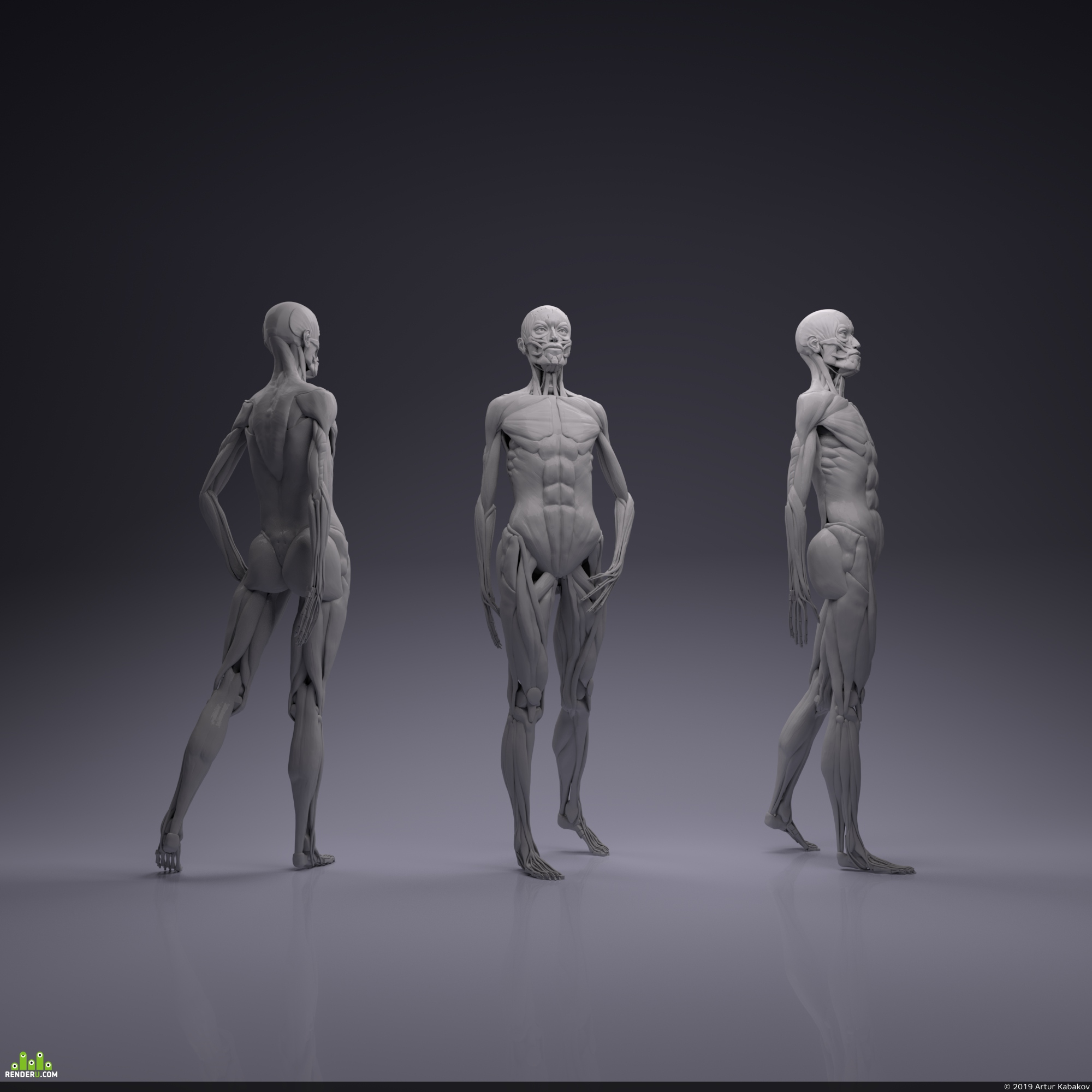 preview Female anatomy
