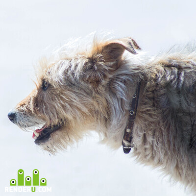 preview Exterrier