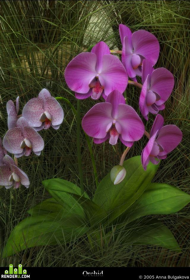 preview цветки-зверьки