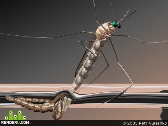 preview komar