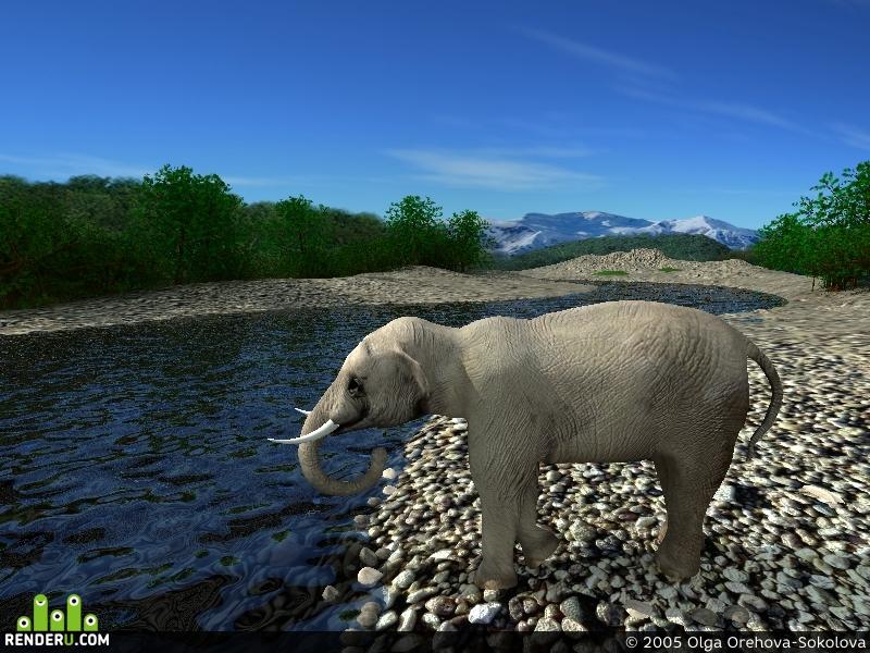 preview Indiyskiy slon
