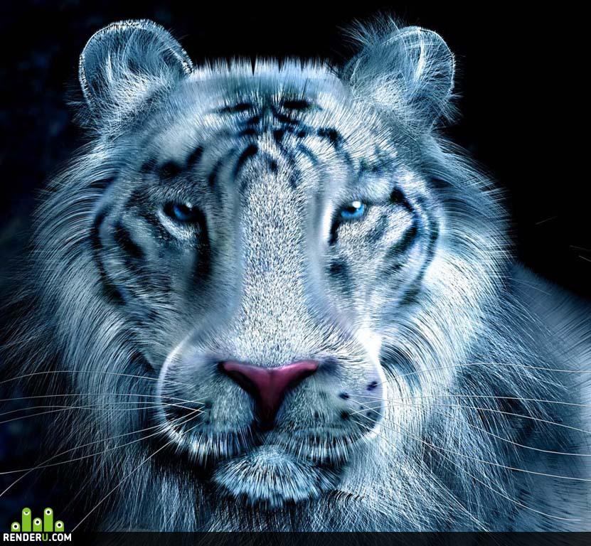 preview Belyiy Tigr
