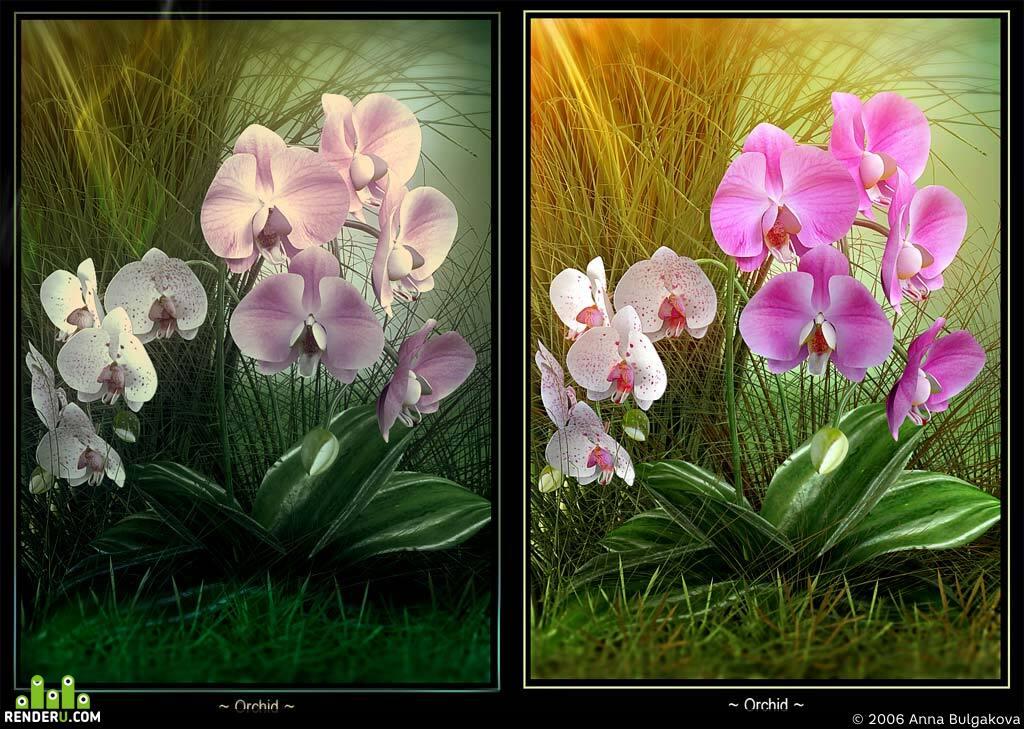 preview Trio Orhidei