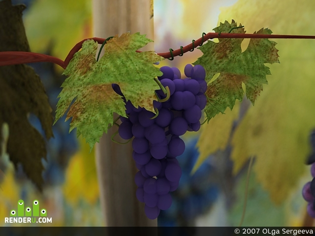 preview vinograd