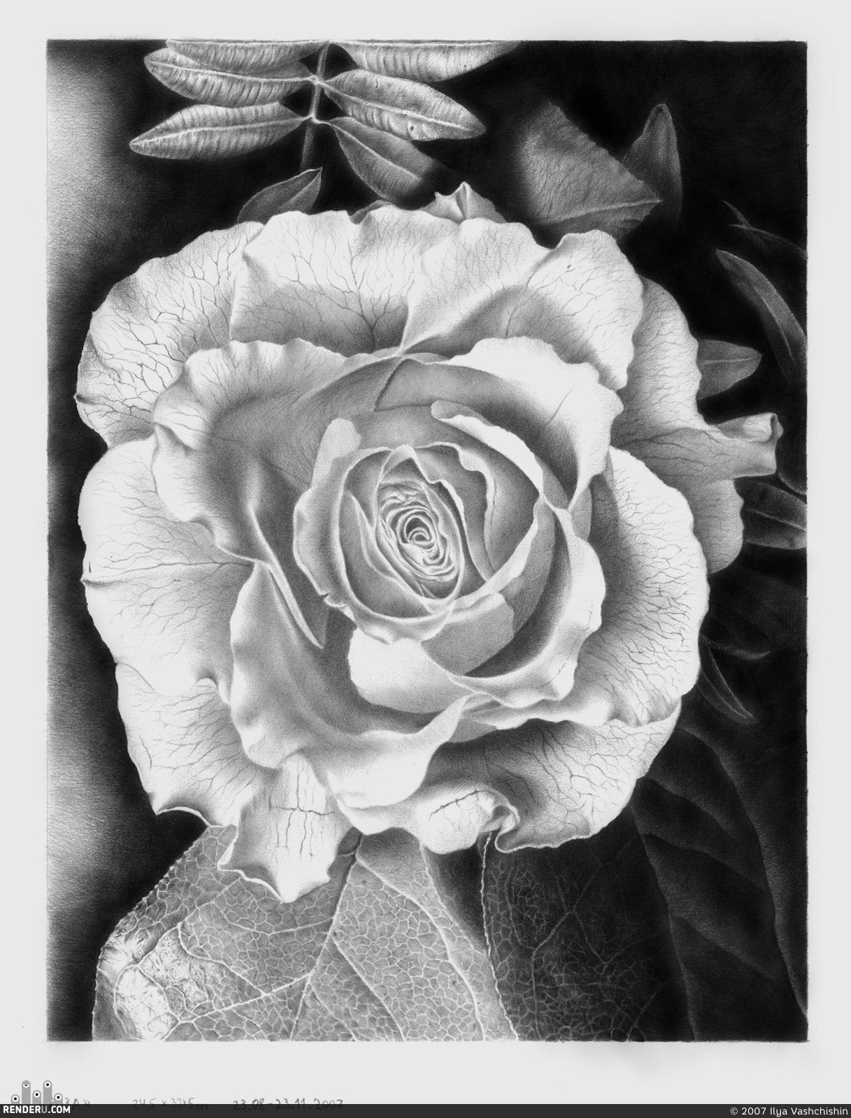 preview Прекрасный цветок