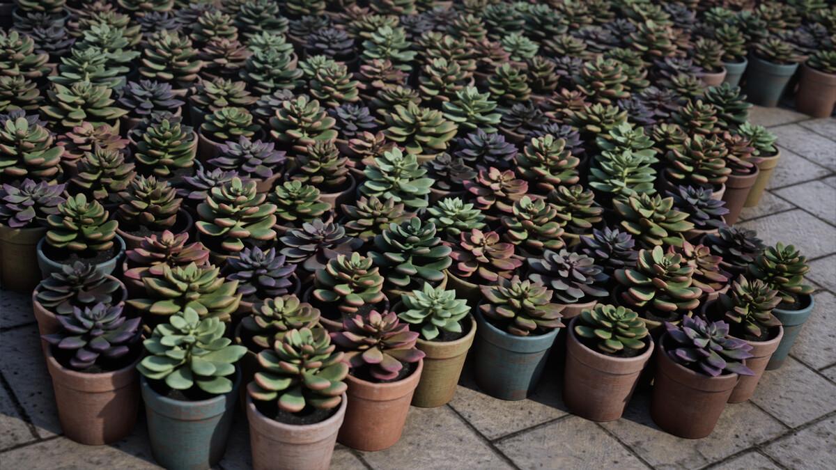 succulents01-1920x1080-39b1ef6264c2d77610461ac9e052deaf.jpg