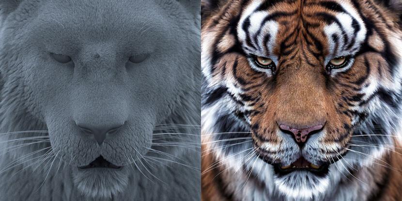 01_TigerClay_415.jpg
