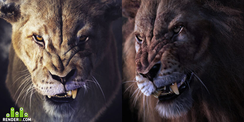 05_Lioness_415.jpg