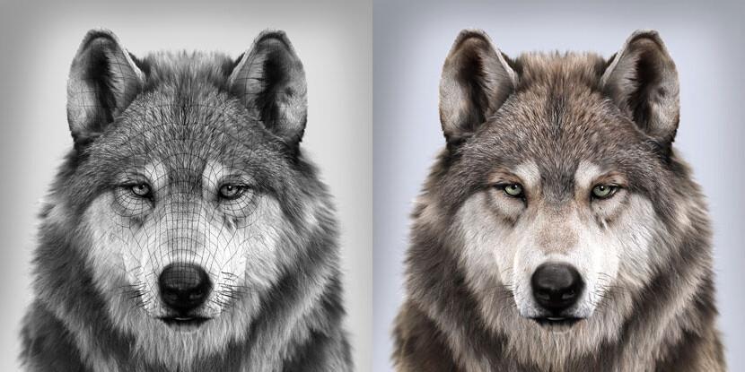 03_WolfWire_415.jpg