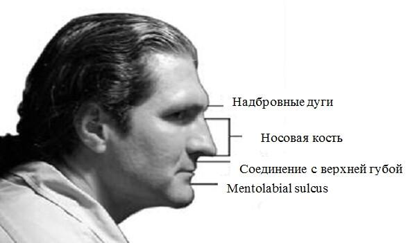 форма мужского лба надбровные дуги фото советы залам