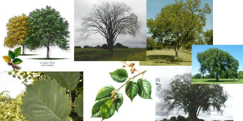 Создания и работы с моделями деревьев картинка на аву ватсап для девушек работа
