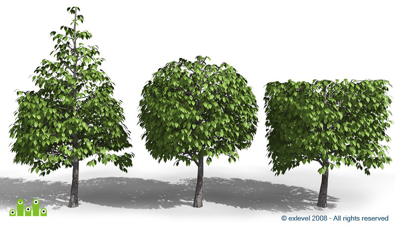 Tree_04.jpg
