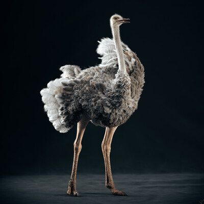yeti, yeti_feathers, ostrich, 3d_ostrich, cg_ostrich, grooming, groom, feather_scater, Arnold, cganimal
