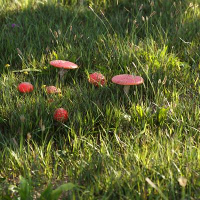 трава, грибы, мухомор