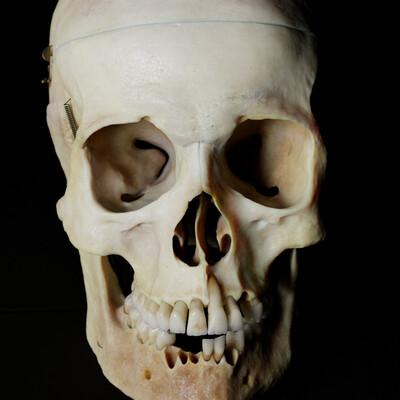 анатомия, череп
